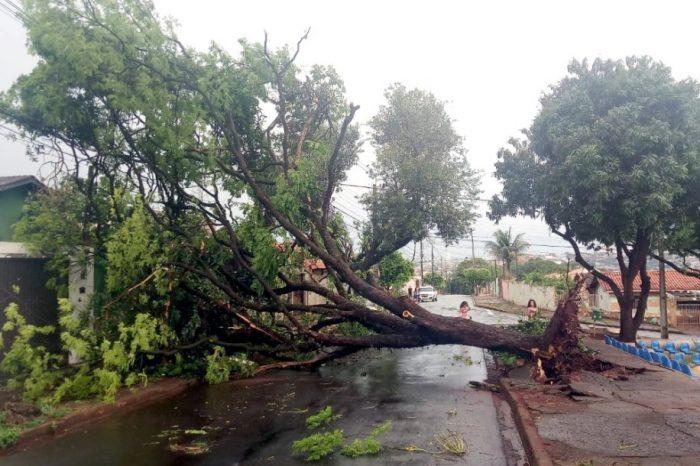 Defesa Civil Municipal contabiliza 31 quedas de árvores em Londrina